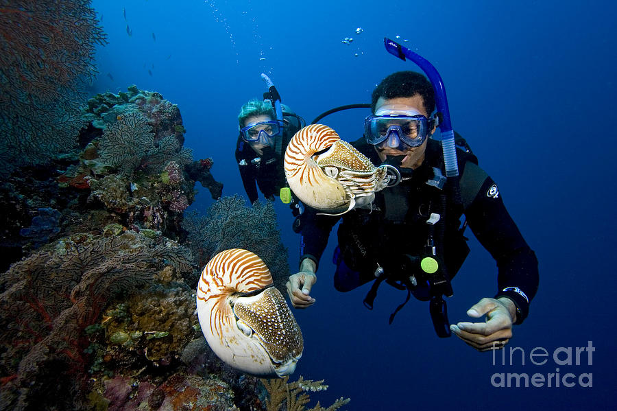 Adventure Photograph - Palau Underwater by Dave Fleetham - Printscapes