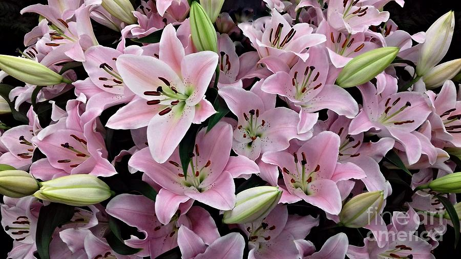 Pale Pink Star Lilies Photograph By Joan Violet Stretch