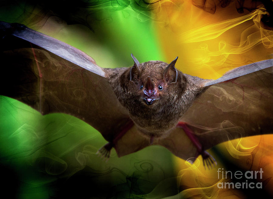Pale Photograph - Pale Spear-nosed Bat In The Amazon Jungle by Al Bourassa