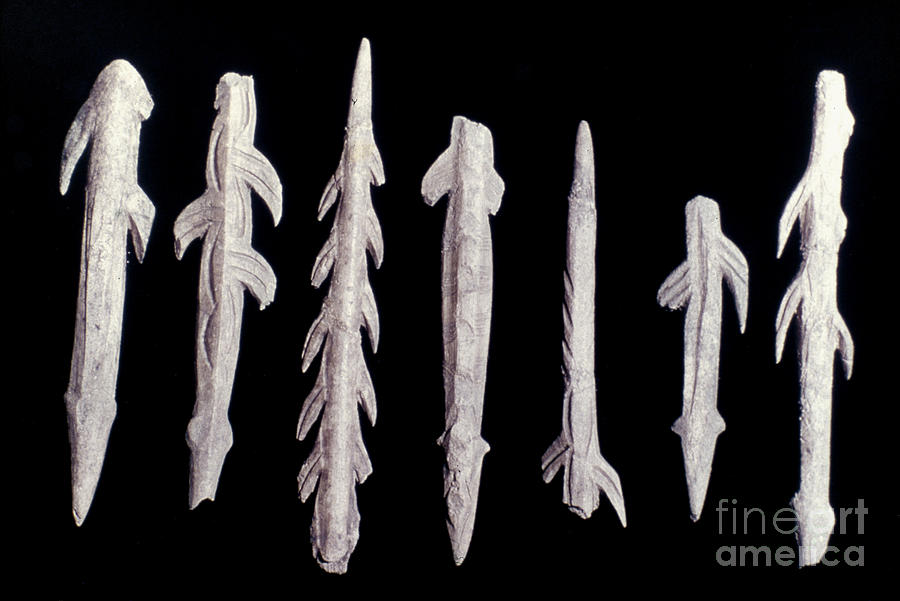 Archaeology Photograph - Paleolithic Harpoons by Granger