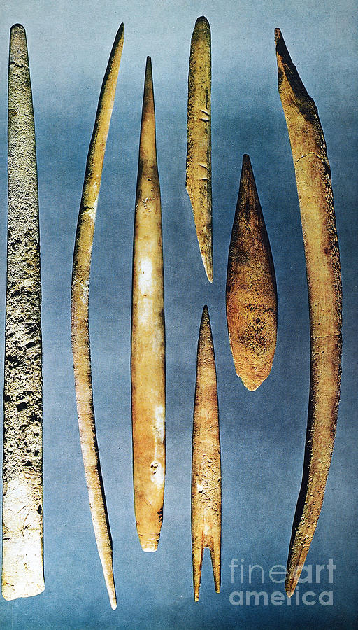 10000 Photograph - Paleolithic Spears by Granger