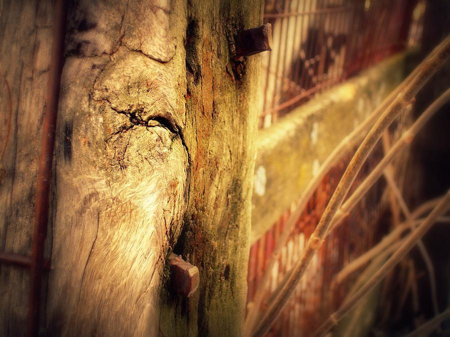 Fence Post Photograph - Paletto Caldo  by Scot Johnson