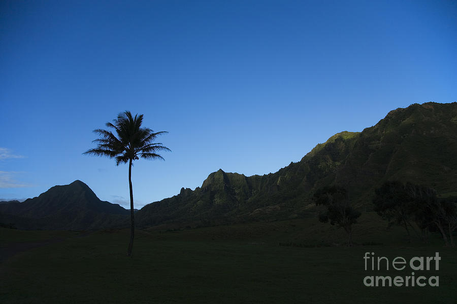 Bright Photograph - Palm And Blue Sky by Dana Edmunds - Printscapes