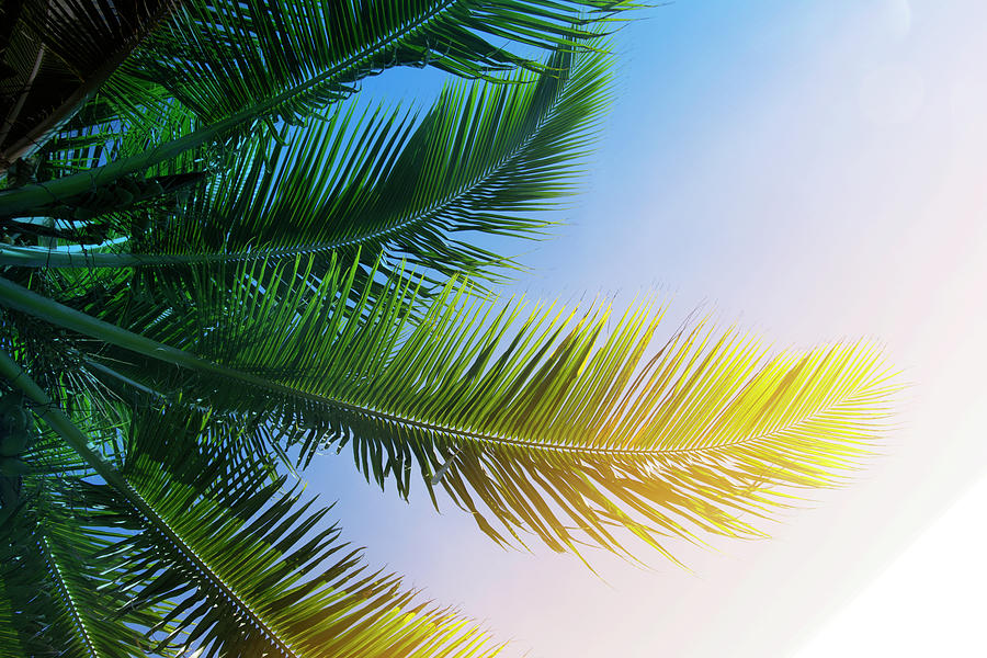 Palm branches by Jocelyn Friis