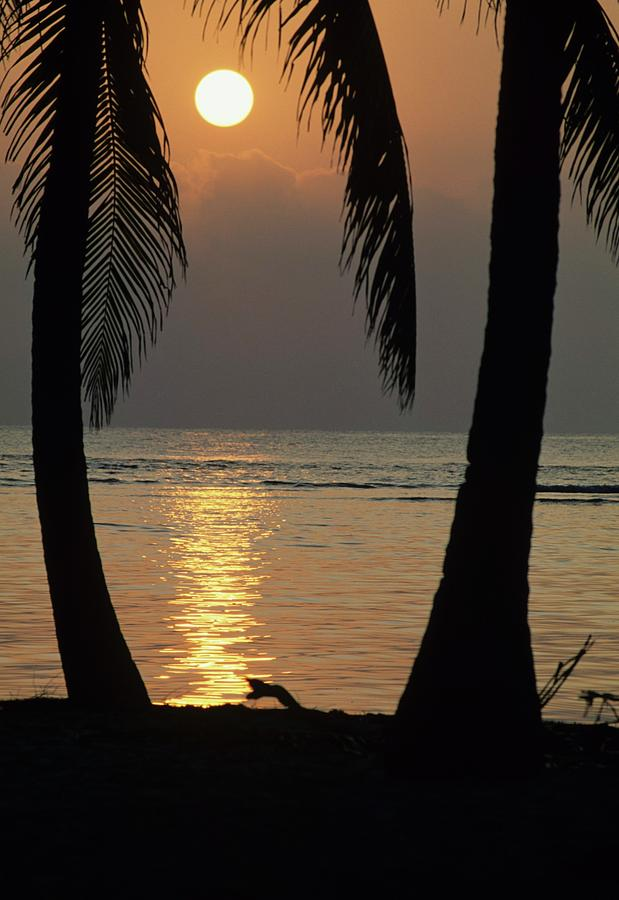 Belize Photograph - Palm Fronds And Sunset Over Caribbean by Don Kreuter