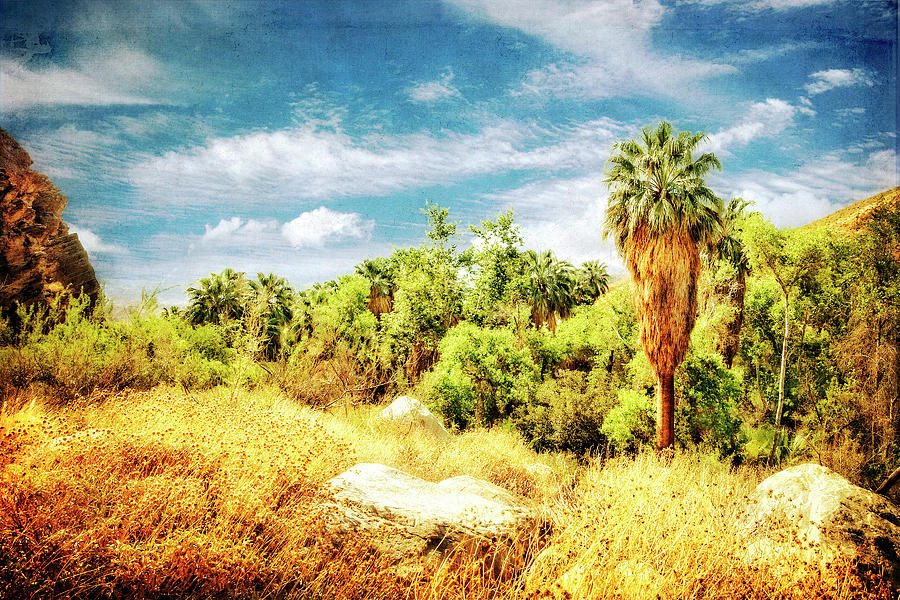 Palm Canyon Photograph - Palm Grove by Sandra Selle Rodriguez
