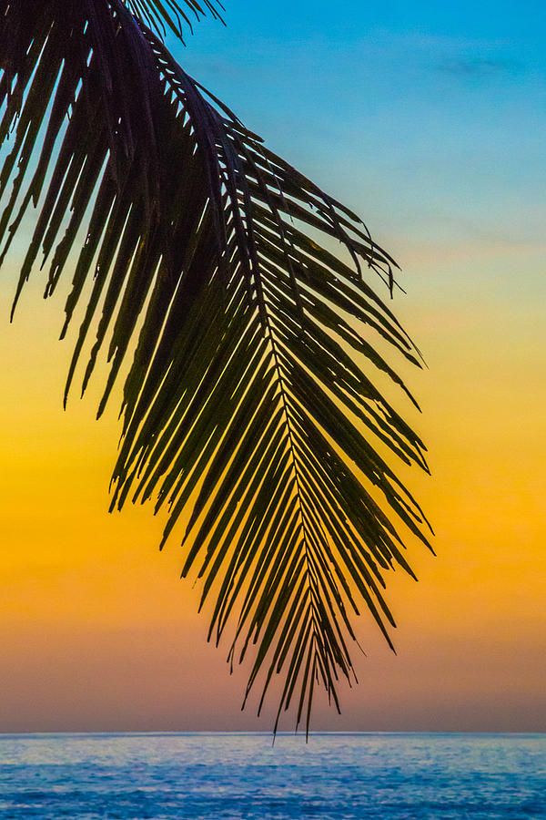 Palm Leaf at Sunset by Cyndi Goetcheus Sarfan