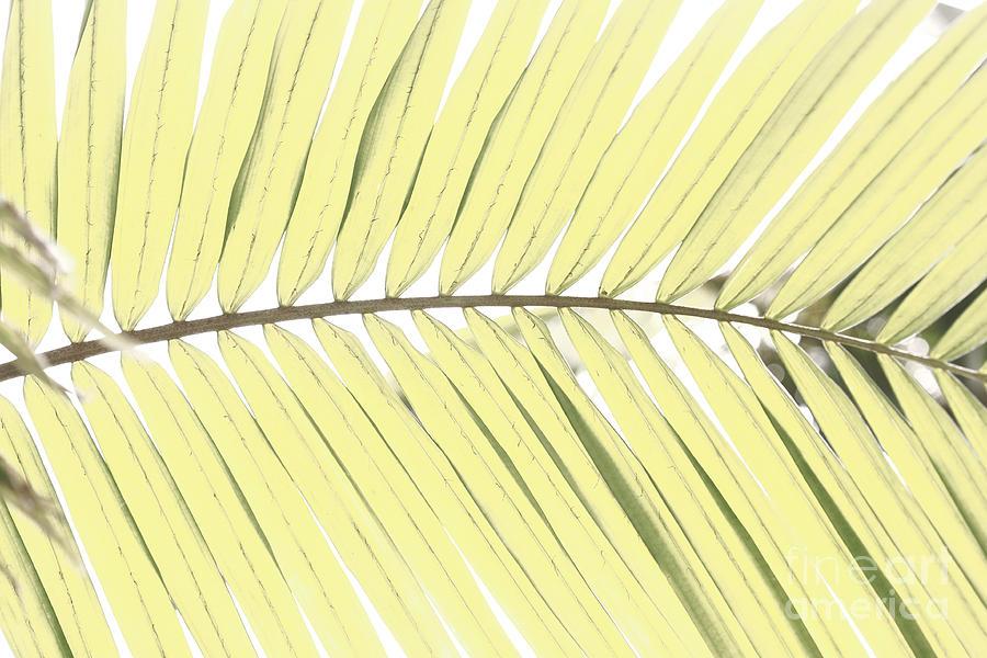 Palm Photograph - Palm Leaf by Gaspar Avila