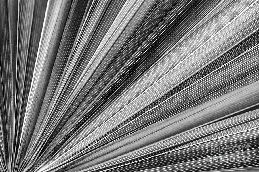 Leaf Photograph - Palm Leaf Texture by Elena Elisseeva