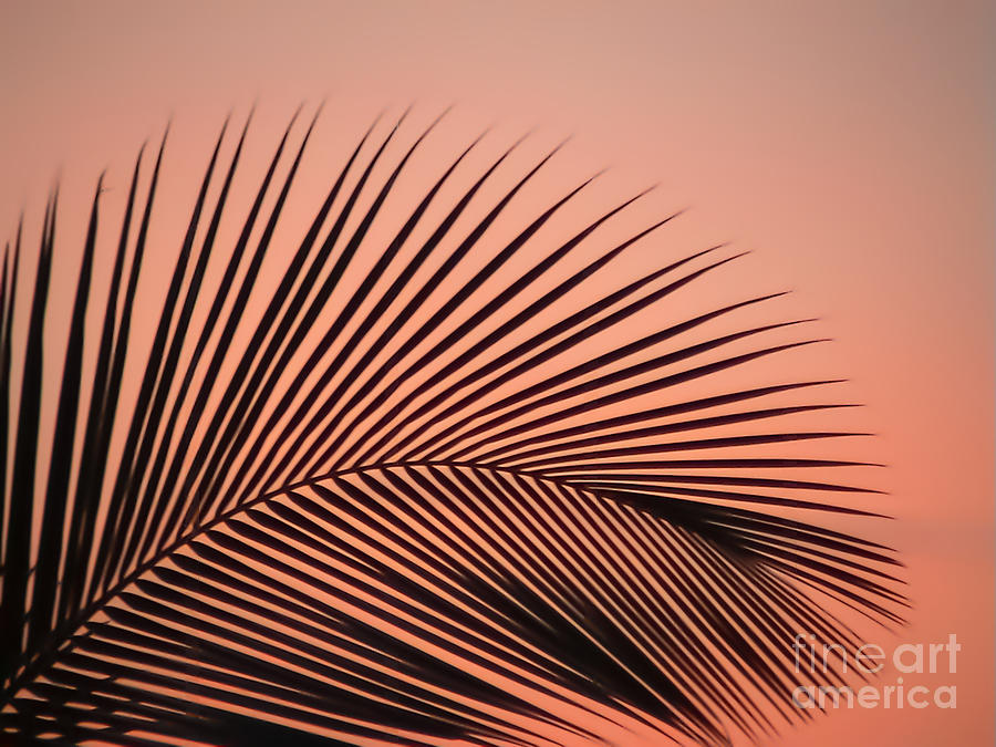 Palm Leafe by Eric Nagel