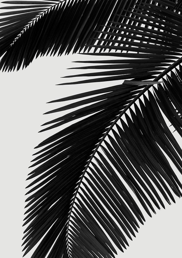palm leaves bw digital art by rafael farias