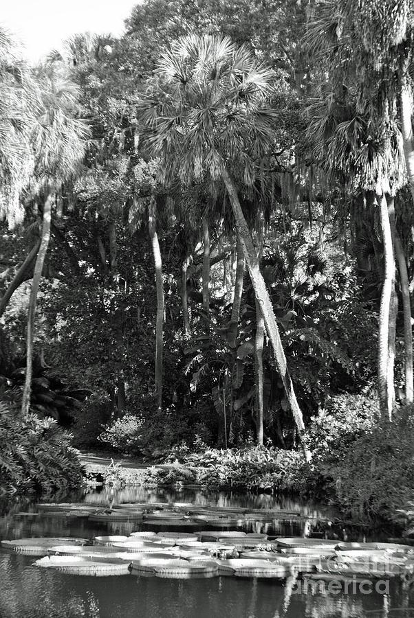 Landscape Photograph - Palm Of The Swamp by Jost Houk