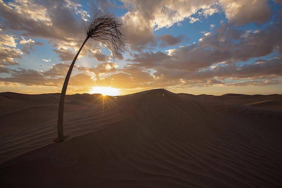 Libya Photograph - Palm on dune by Ibrahim Azaga