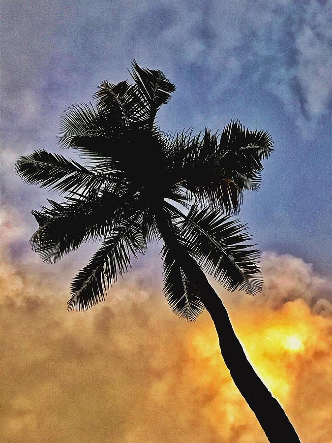 Palm Tree Digital Art - Palm On The Beach by Brenda Michniewicz