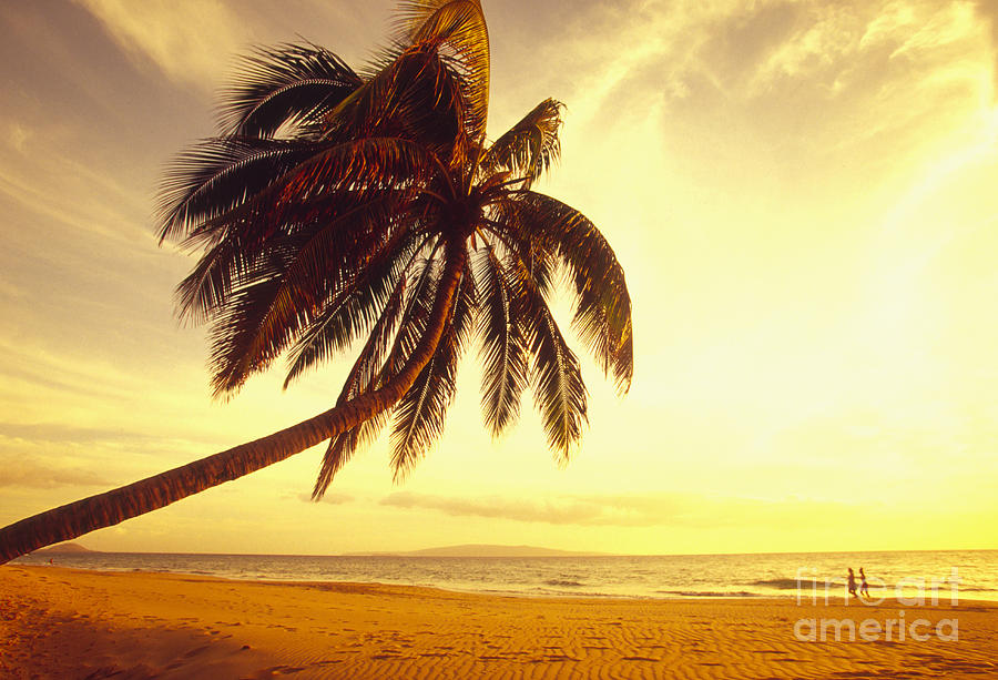 Afternoon Photograph - Palm Over The Beach by Ron Dahlquist - Printscapes