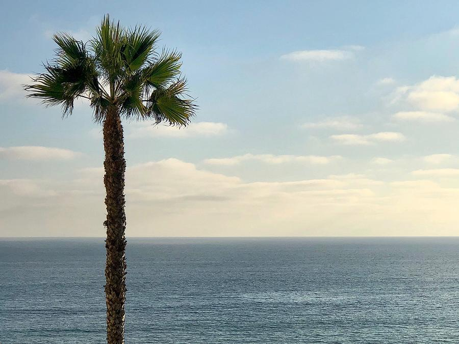 Palm Photograph - Palm Over The Sea by Brian Eberly