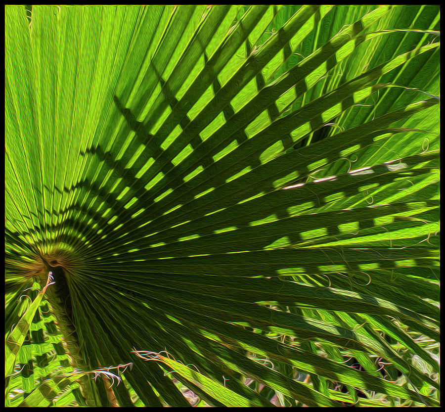 Oro Valley Photograph - Palm Pattern No.1 by Mark Myhaver