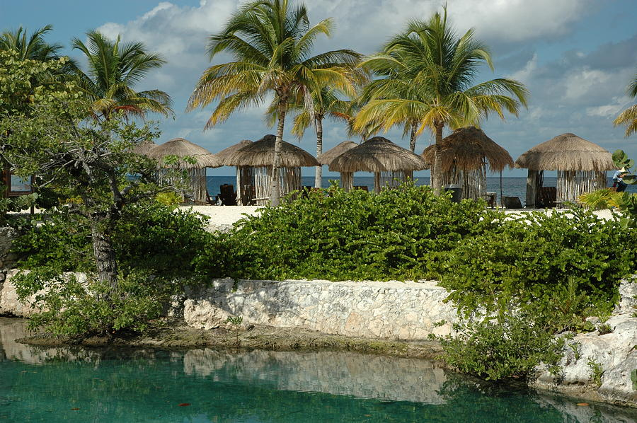 Paradise Photograph - Palm Skies by Lori Mellen-Pagliaro