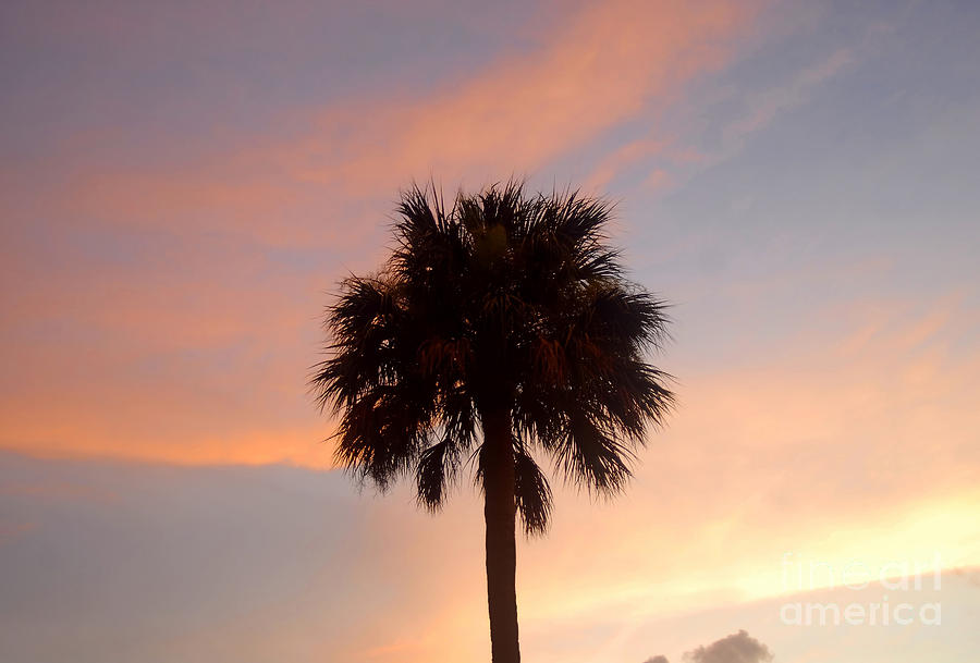 Palm Tree Photograph - Palm Sky by David Lee Thompson
