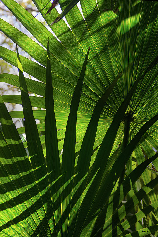 Palm Study 1 by Dana Sohr