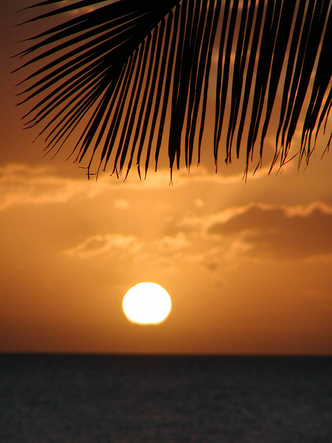 Maui Photograph - Palm Sunset Hawaii by Dustin K Ryan