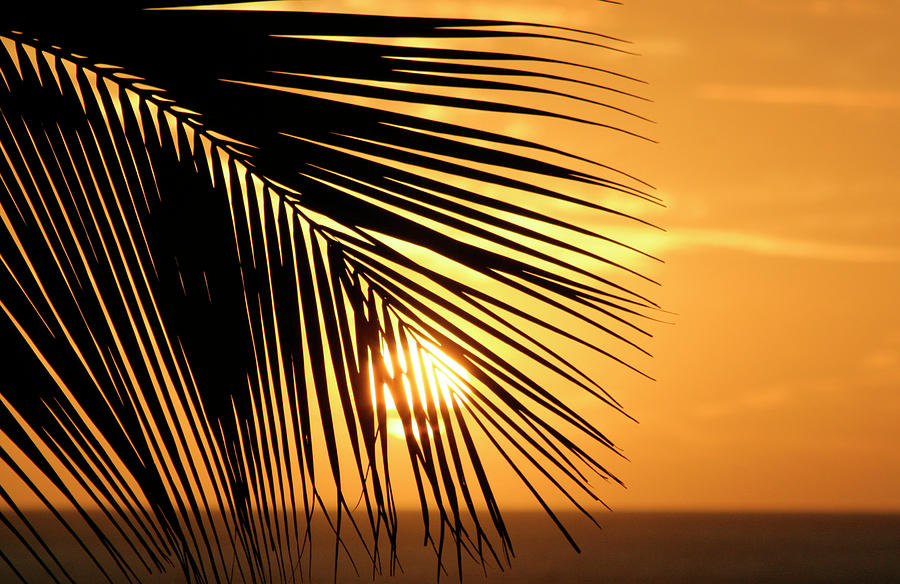 Hawaii Photograph - Palm Sunset by Vicki Hone Smith