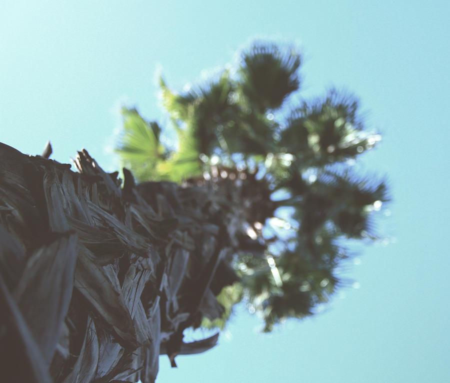 Palm Photograph by Tabiben Riad