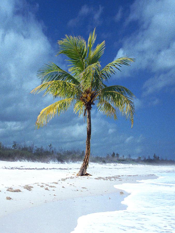 Palm Tree Digital Art - Palm Tee In The Sand by Richard Nickson