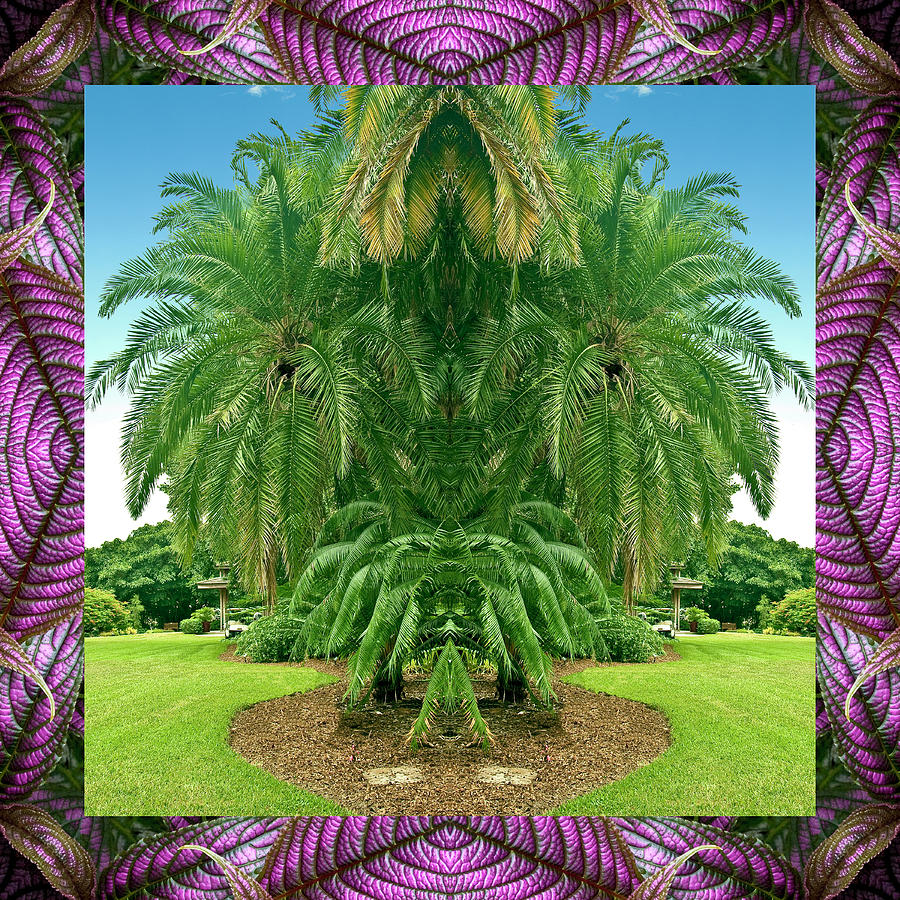 Nature Photography Photograph - Palm Tree Ally by Bell And Todd
