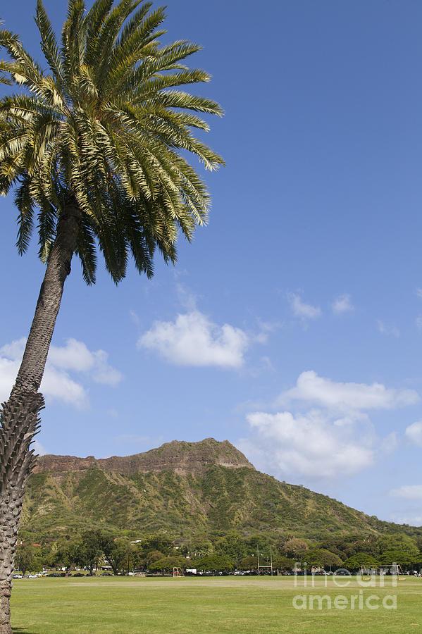 Diamond Photograph - Palm Tree And Diamond Head by Brandon Tabiolo
