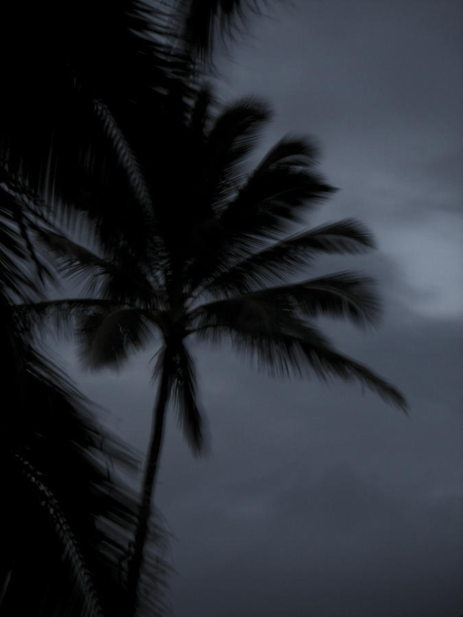 Palm Tree Photograph - Palm Tree At Night by Jonathan Hansen