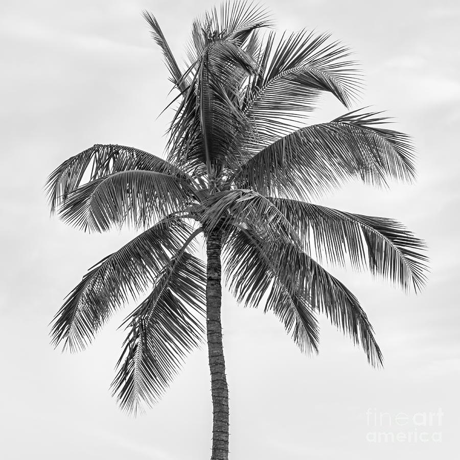 Palm Photograph - Palm Tree by Elena Elisseeva