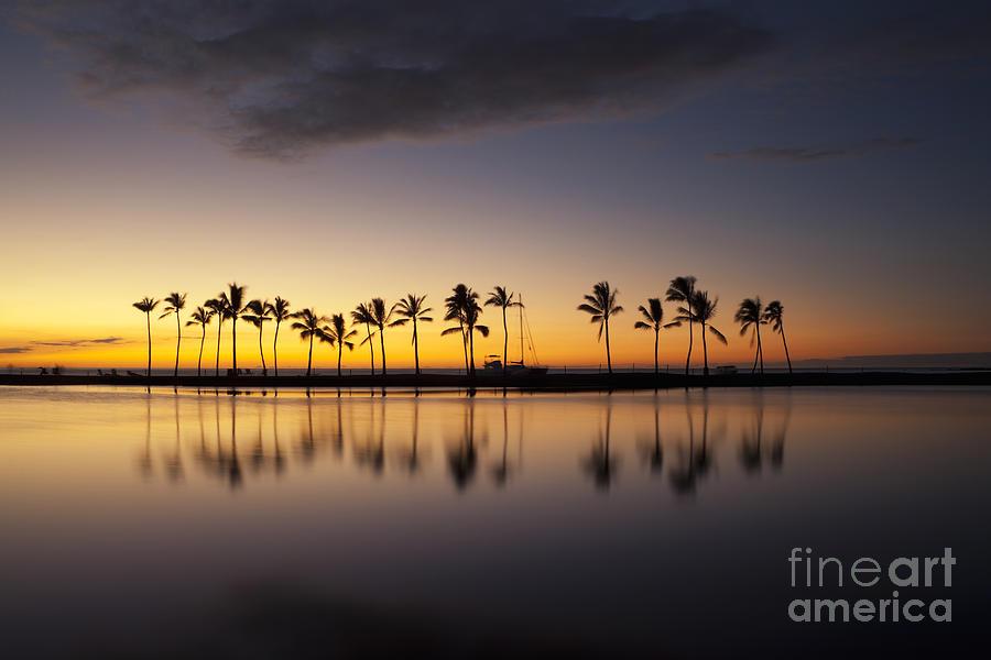Glow Photograph - Palm Tree Grove at Kuualii Hawaiian Fishpond by Charmian Vistaunet