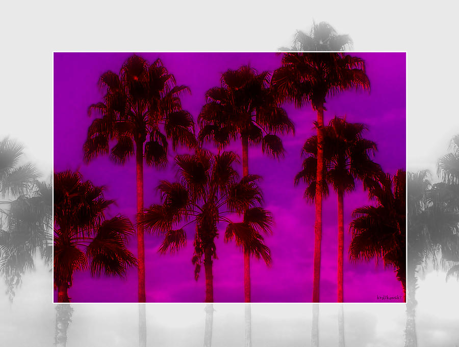 Palm Photograph - Palm Tree Heaven by Kenneth Krolikowski