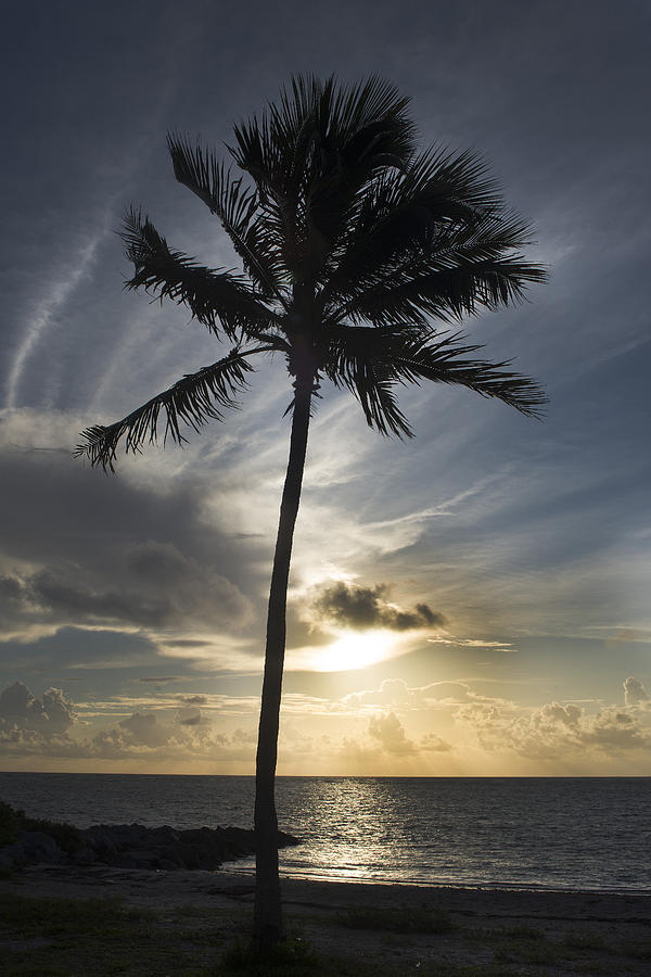 Palm Tree Photograph - Palm Tree In Vk by Guillermo Borges