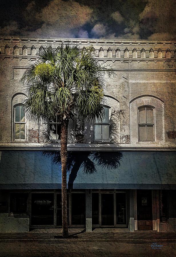 Palm Photograph - Palm Tree by Jim Ziemer