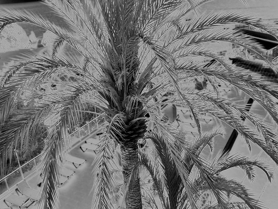 Palm Tree Photograph by John Bradburn