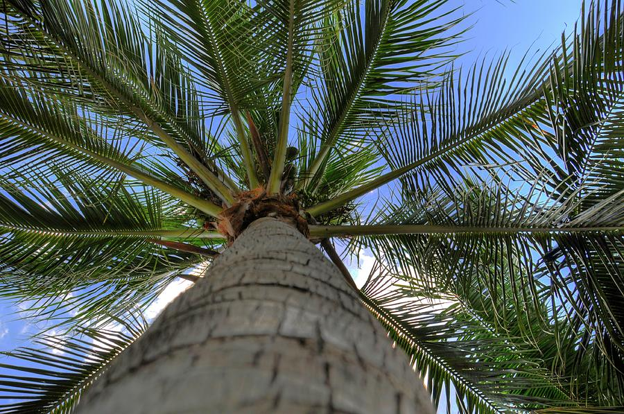 Palm Tree Photograph - Palm Tree by Kelly Wade