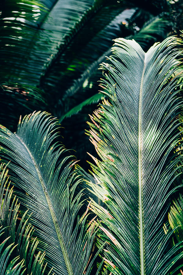 Palm Tree Leaves Photograph By Pati Photography Search more hd transparent tropical leaves image on kindpng. palm tree leaves by pati photography
