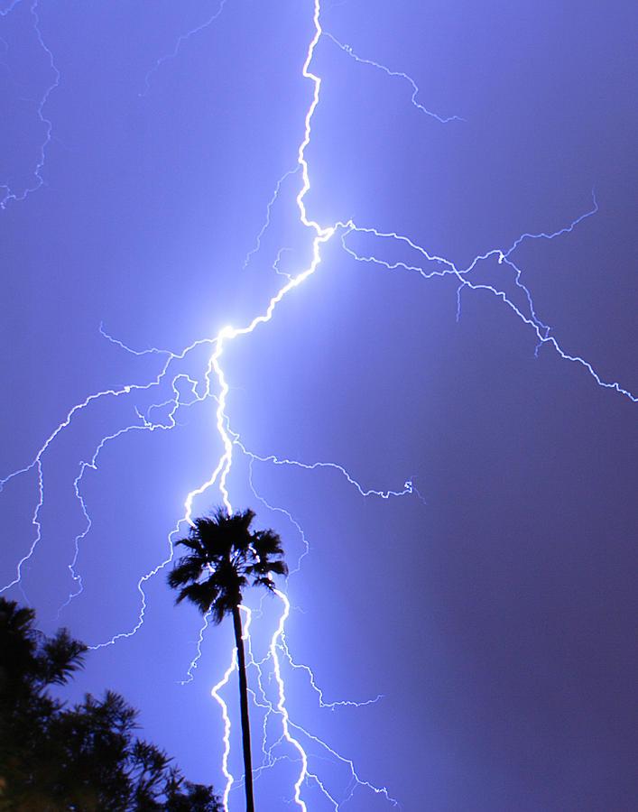 Lightning Photograph - Palm Tree On Strike by James BO  Insogna