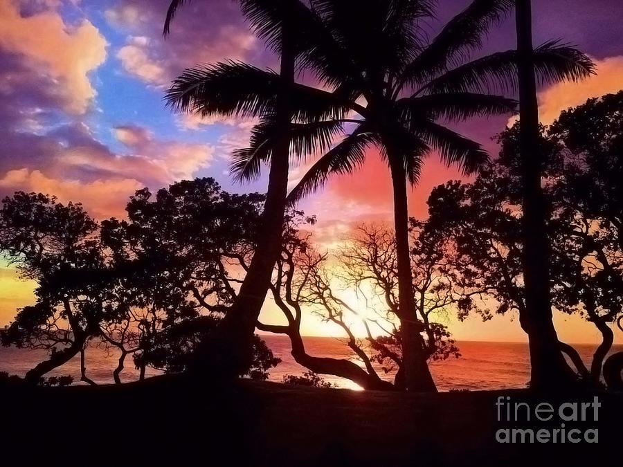 Palm Tree Silhouette Photograph