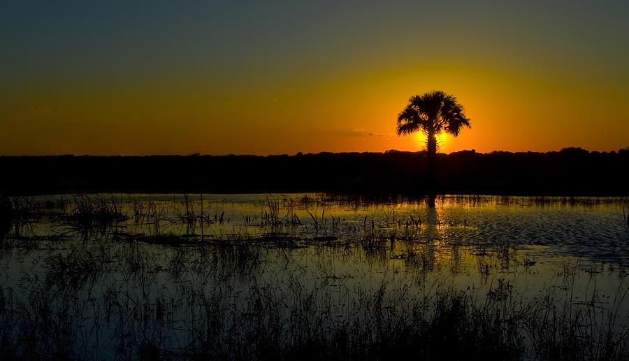 Sunset Photograph - Palm Tree Sunday by Colleen Joy