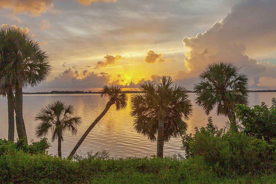 Palm Tree Sunrise by Gordon Elwell