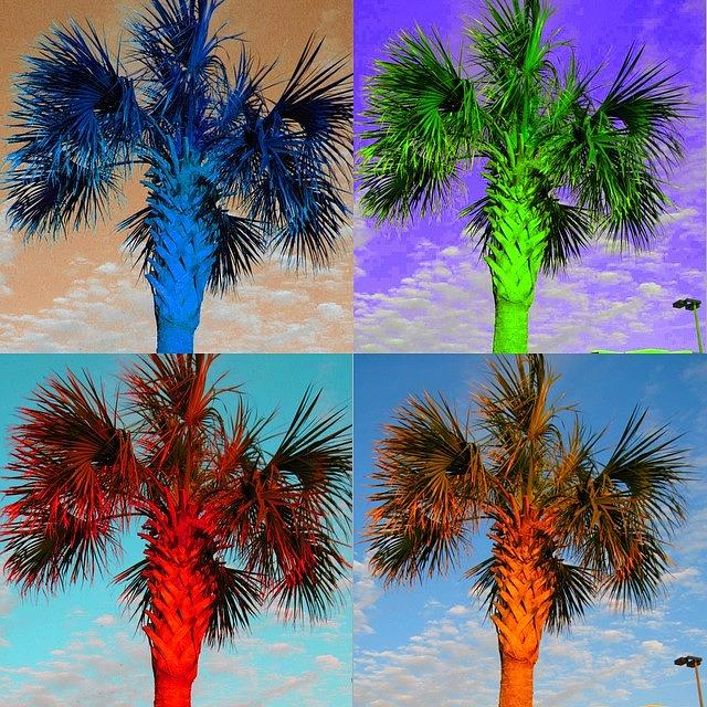 Palm Tree Photograph - Palm Tree Times Four by Sandie Smith