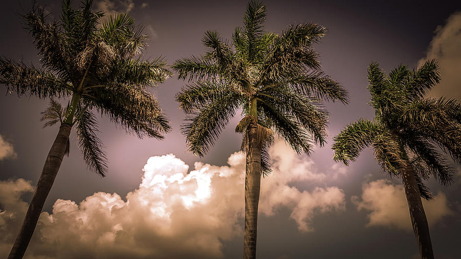 Beauty In Nature Photograph - Palm Trees Against Beautiful Sky by Art Spectrum