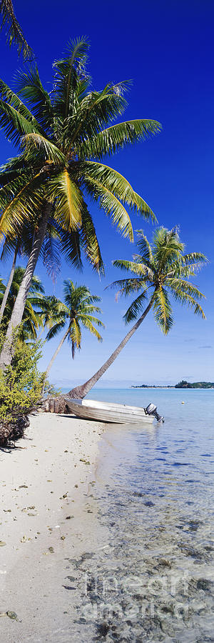 Beach Photograph - Palm Trees And Motorized Dinghy by Jeremy Woodhouse