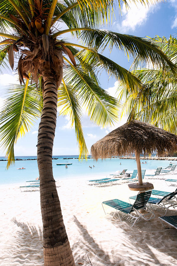 Antilles Photograph - Palm Trees And Palapa by George Oze