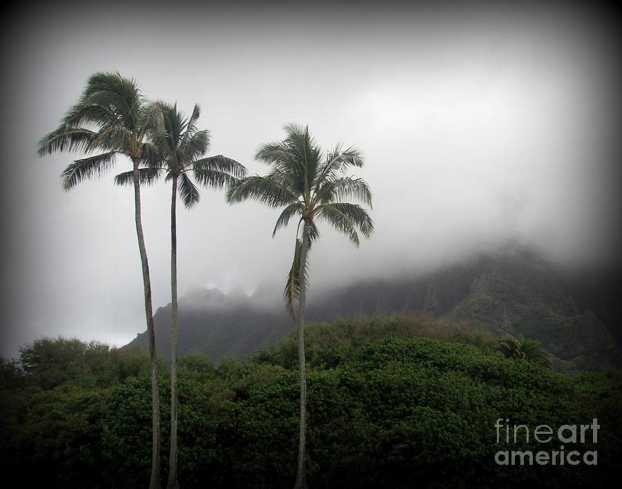 Oahu Photograph - Palm Trees at Kualoa Park Oahu by Joy Patzner