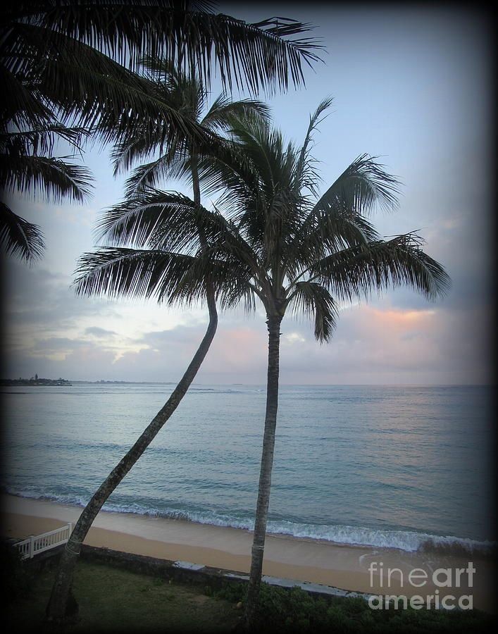 Oahu Photograph - Palm Trees at Sunrise in Oahu by Joy Patzner