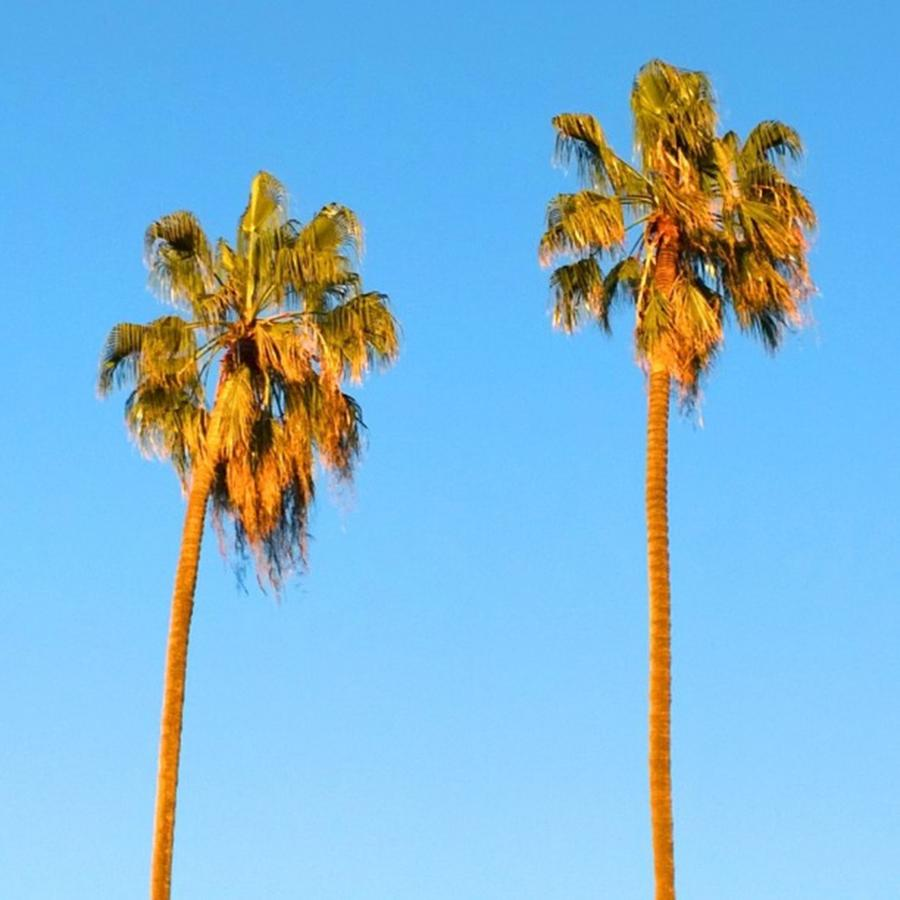 Summer Photograph - #palm #trees At Sunset. #california by Shari Warren
